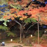 松島紅葉ライトアップ