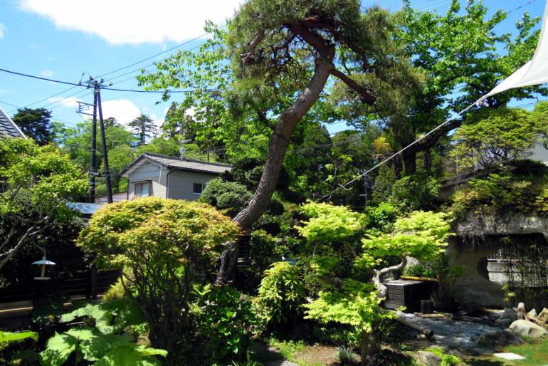 カフェ アルバートの庭